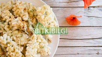Akasya Çiçeği